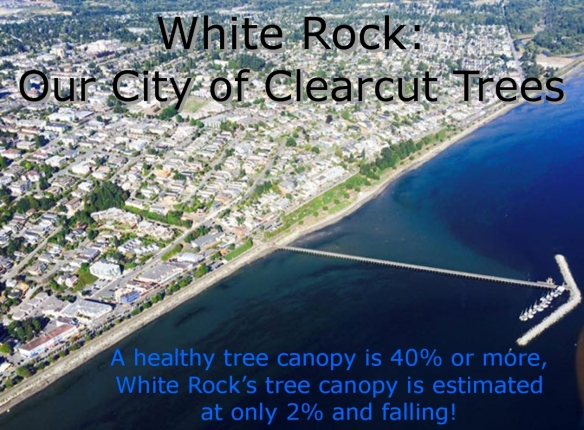 Our City of Clearcut Trees